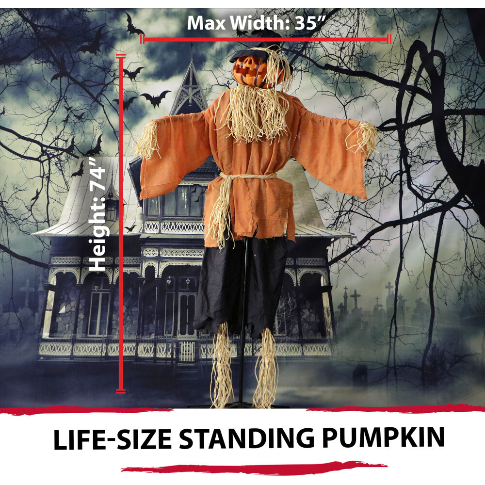 Haunted Hill Farm 6 Ft Animated Scarecrow Prop w Rotating Jack O Lantern Head for Indoor or Outdoor Halloween Decoration Battery Operated
